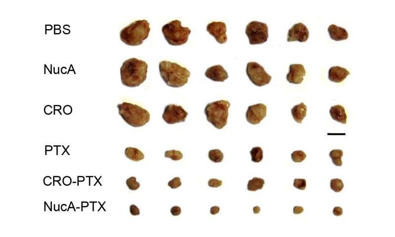 HKBU scholars develop new generation of tumor-specific aptamer-drug conjugate