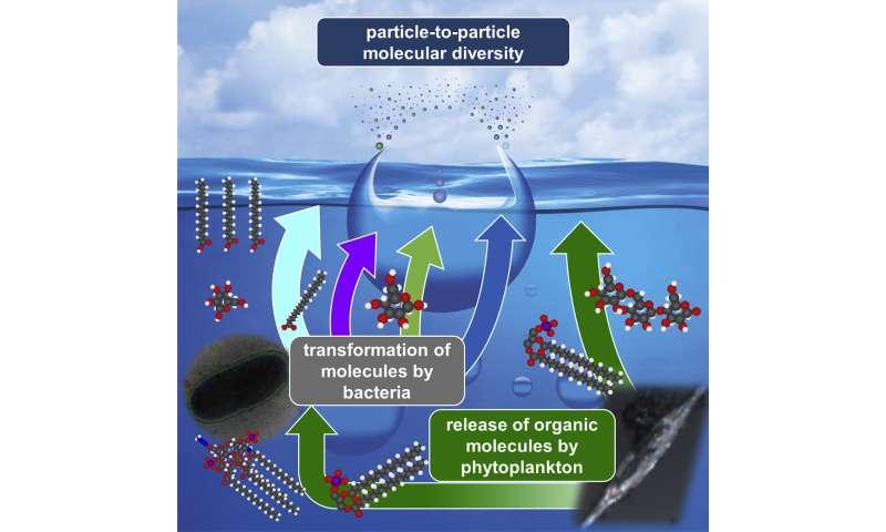 How plankton and bacteria shape ocean spray