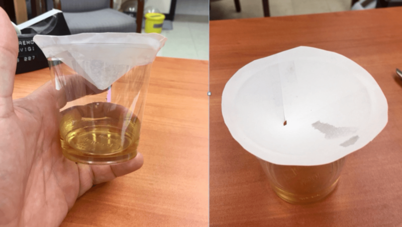 How to kill fruit flies, according to a scientist