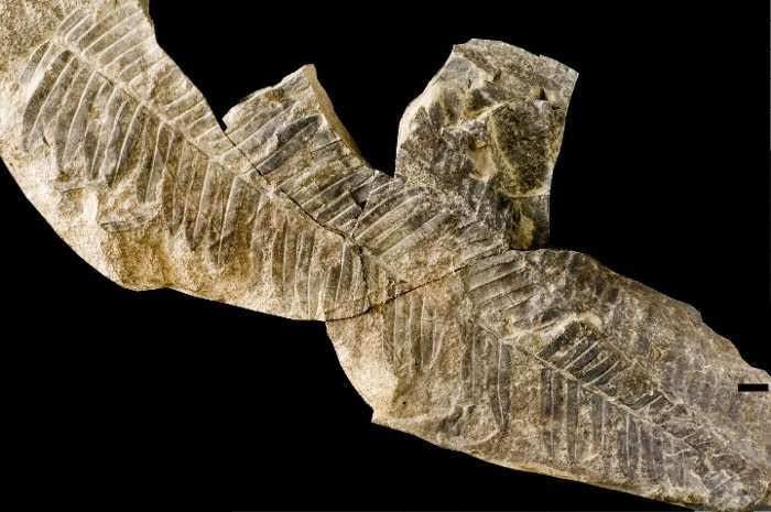Hundreds of fossil tree specimens belong to a single species