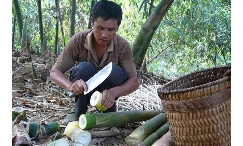 In small village communities, local resources are often not used sustainably