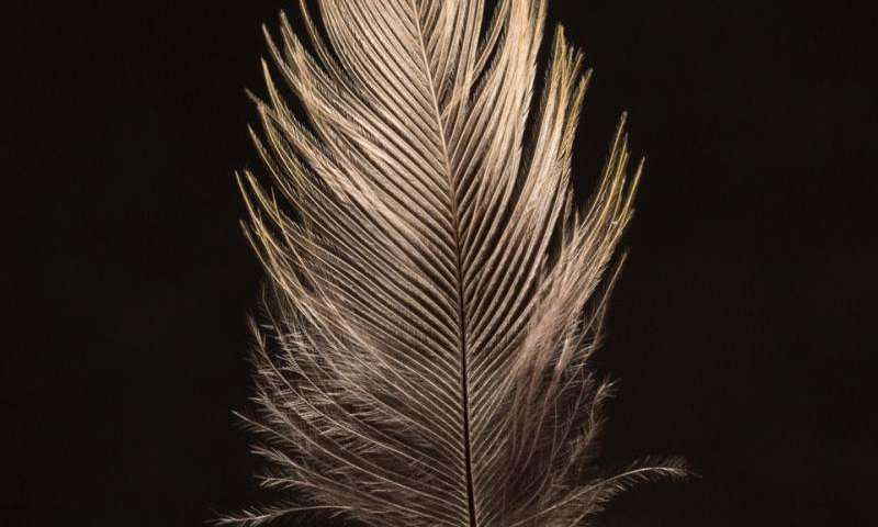 Isotope fingerprints in feathers reveal songbirds' secret breeding grounds