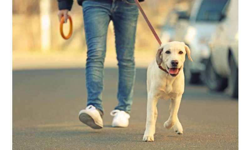 Is walking sufficient cardiovascular exercise?