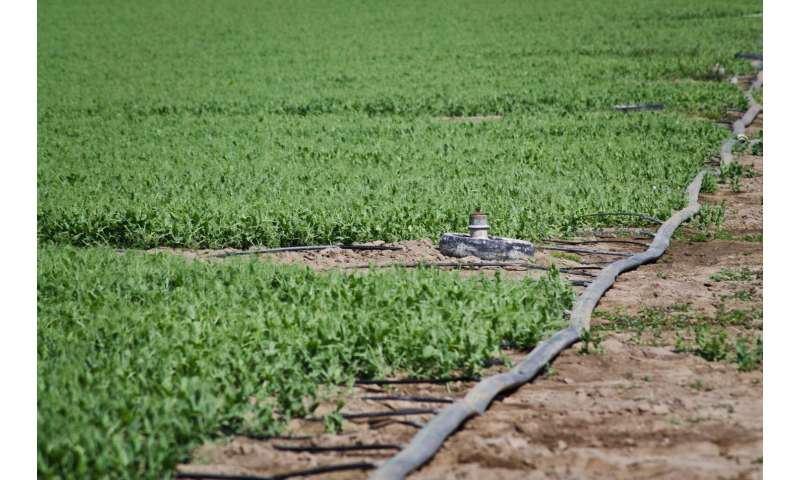 Leaf sensors can tell farmers when crops need to be watered