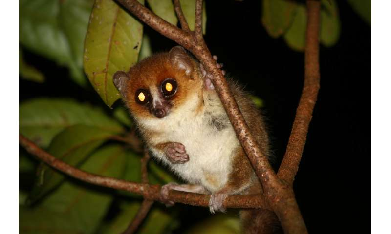Lemurs are weird because Madagascar's fruit is weird