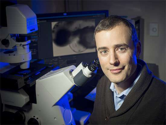 Link found between estrogens and changes in heart physiology