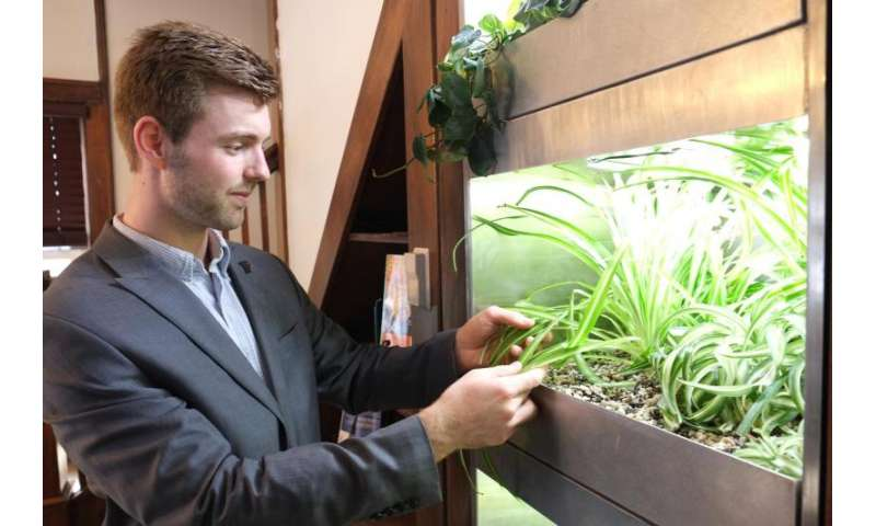 Living 'BioWall' of plants could clean household air, lower energy bills