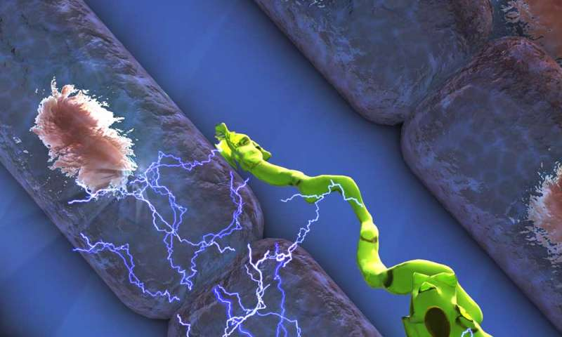 Macrophages conduct electricity, help heart to beat