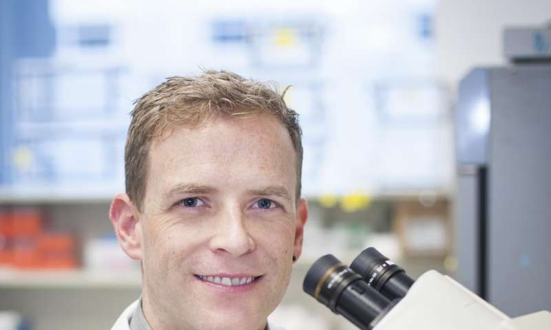 Malaria parasites 'walk through walls' to infect humans