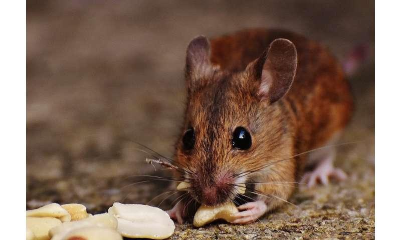 1-mice.jpg