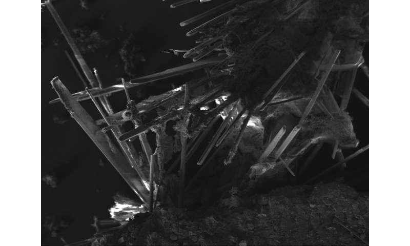 "Microbes leave ""fingerprints"" on Martian rocks"