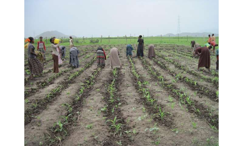 Micro-organisms will help African farmers: Soil microbes to the rescue