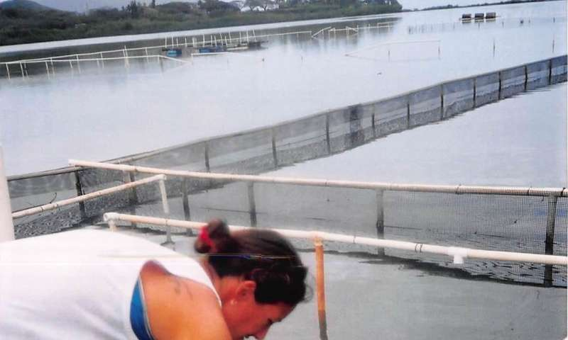 Mānoa: Research reveals how climate change may affect Hawaiian fishpond aquaculture