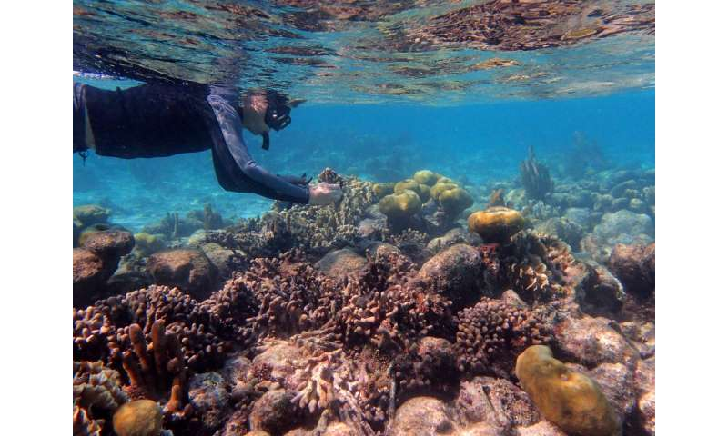 Modern genetic sequencing tools give clearer picture of how corals are related