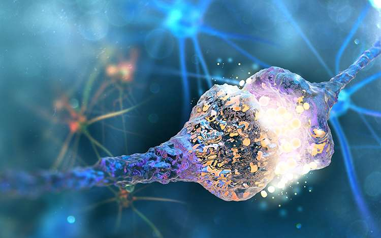 New class of molecules may protect brain from stroke, neurodegenerative diseases