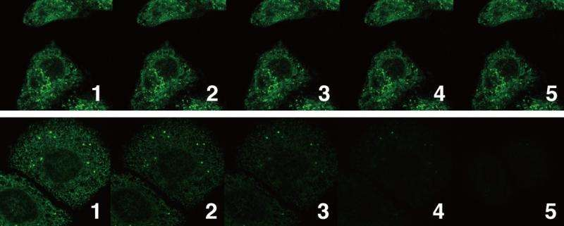 New dye allows super-imaging of cells