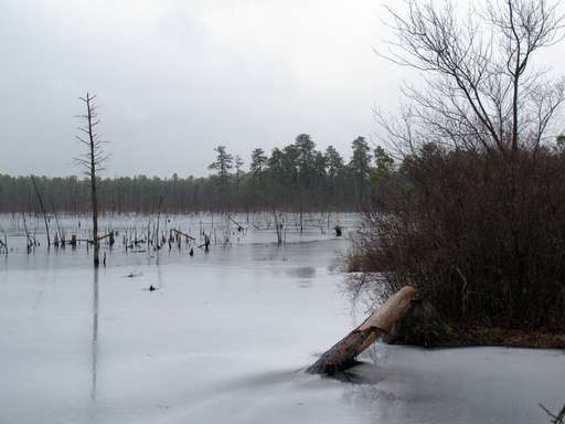 New Jersey Oks gas pipeline through protected Pinelands