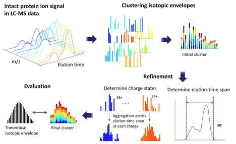 New open-source software for analyzing intact proteins