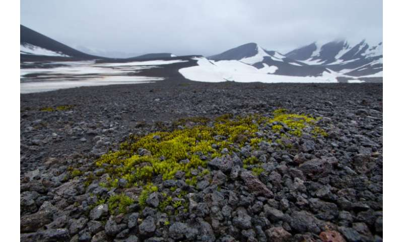 New study explains moss migration around the globe