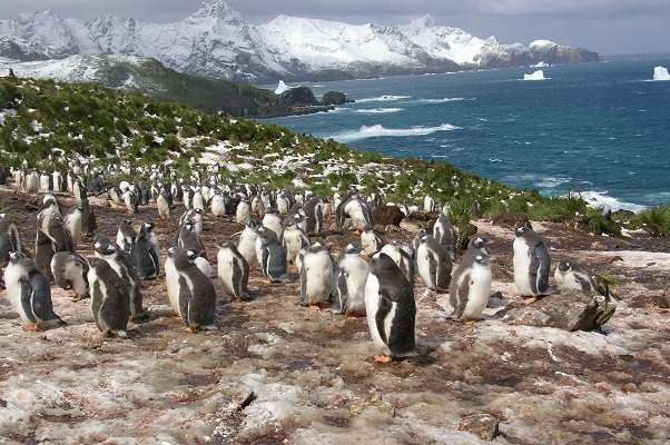 New study reveals what penguins eat