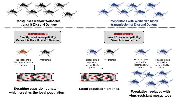 New tool for combating mosquito-borne disease: Insect parasite genes
