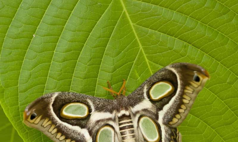 Night-flyers or day-trippers? Study sheds light on when moths, butterflies are active