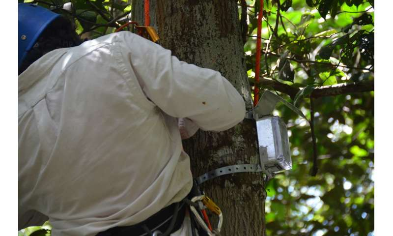 Radar satellites able to measure water stress in trees