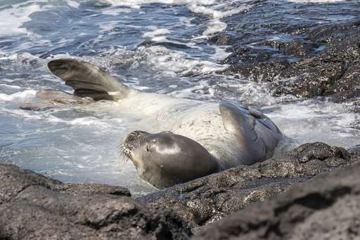Rare monk seal dies in fish farm off Hawaii