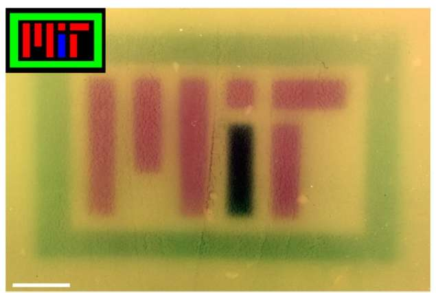 Red, green, and blue light can be used to control gene expression in engineered E. coli