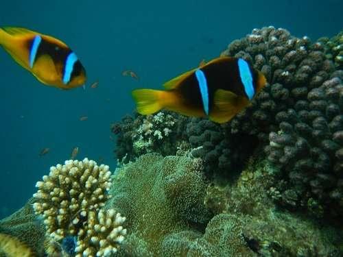 Red Sea gene pool follows water flow
