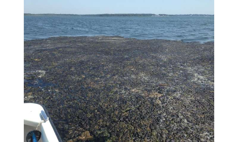 Researcher unveils tool for a cleaner long island sound