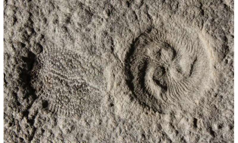 Reverse engineering mysterious 500-million-year-old fossils that confound our tree of life