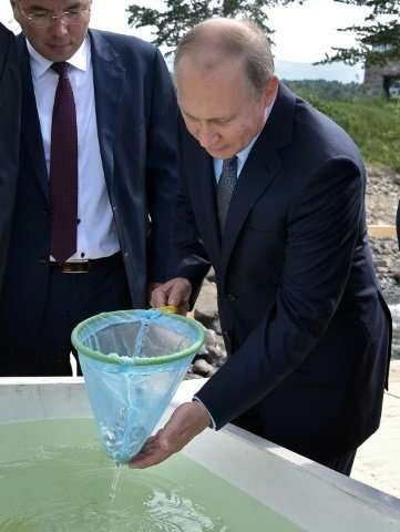 Russian President Vladimir Putin recently released young omul fish into Lake Baikal