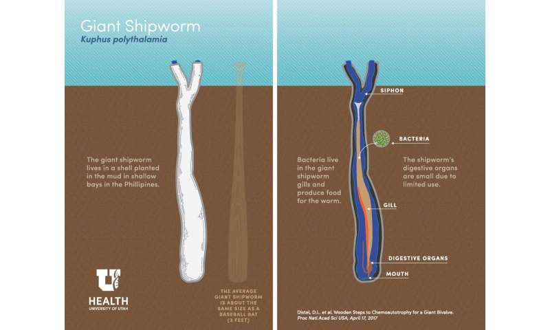 Science fiction horror wriggles into reality with discovery of giant sulfur-powered shipworm