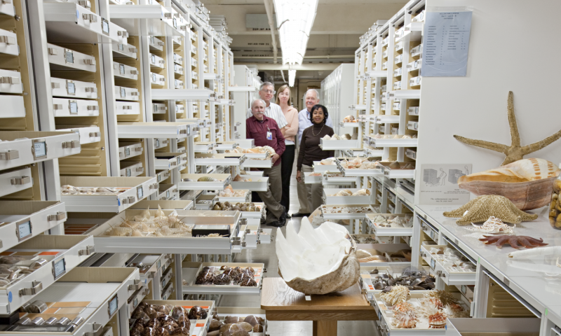 Scientists link biodiversity genomics with museum wisdom through new public database