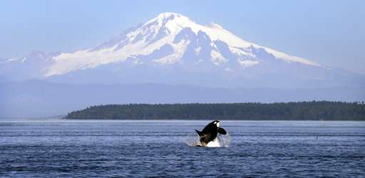 Ships slowing in busy channel to protect endangered orcas