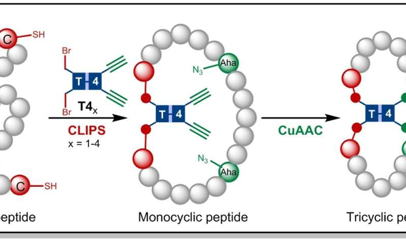 Simple one-pot synthesis of druggable tricyclic peptides