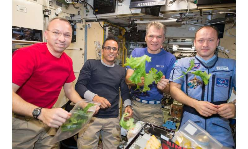 Stressed seedlings in space