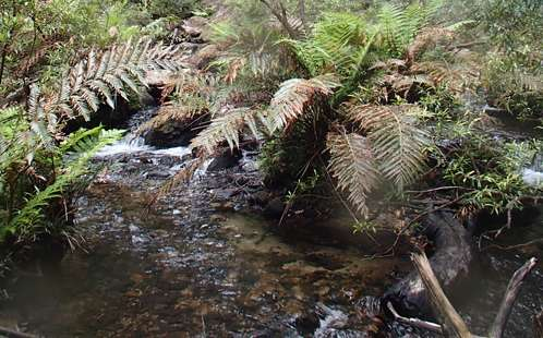 Study finds toxic mine discharge flowing into Blue Mountains World Heritage Area