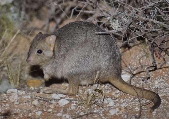 Teaching threatened species to be wary of predators