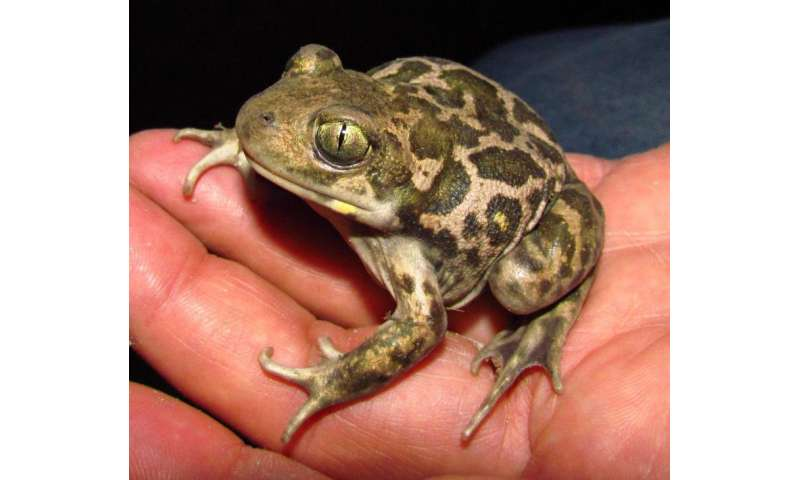 The development of amphibians and reptiles through twelve million years of geological history