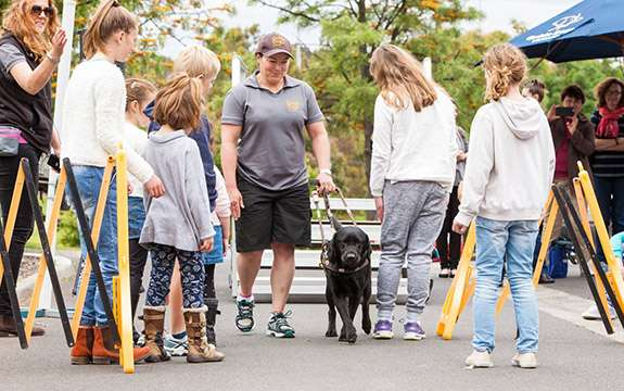 The impact of a guide dog extends far beyond its guiding responsibilities