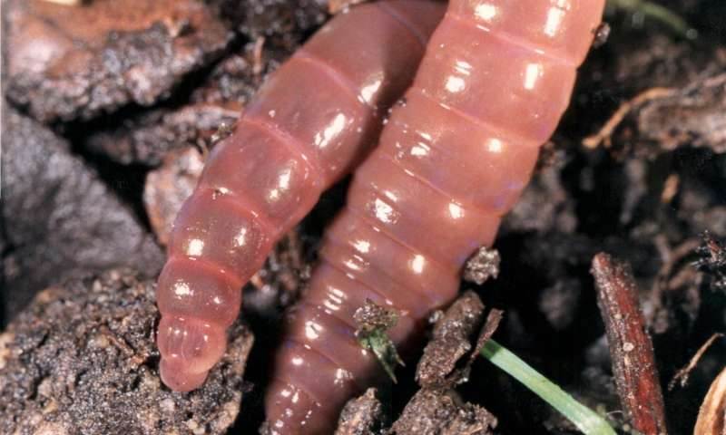 Tillage farming damaging earthworm populations, say scientists