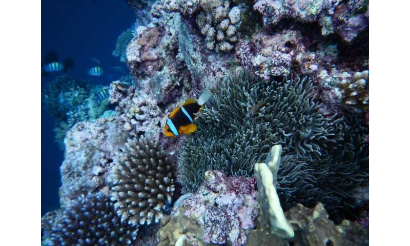 To succeed, large ocean sanctuaries need to benefit both sea life and people