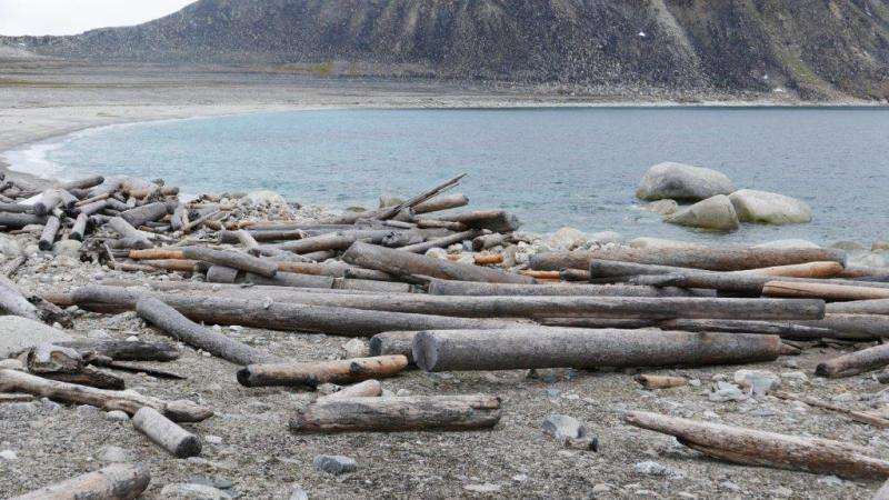 Tracking driftwood gives researchers insight into past Arctic Ocean changes