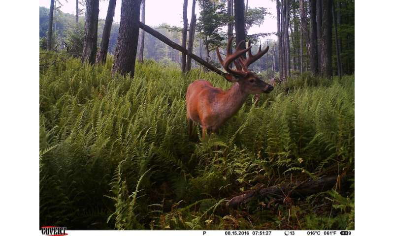 Trail cams used to monitor predators of deer fawns