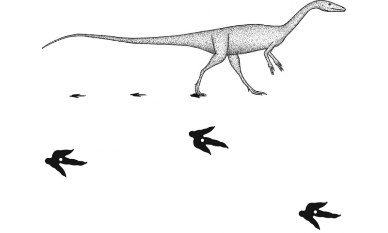 Using step width to compare locomotor biomechanics between dinosaurs and modern bipeds