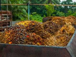 Using waste biomass for the sustainable production of industrial chemicals