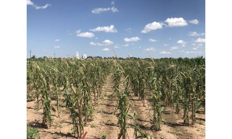 Water use, drought-tolerant hybrids still key to dryland crop production