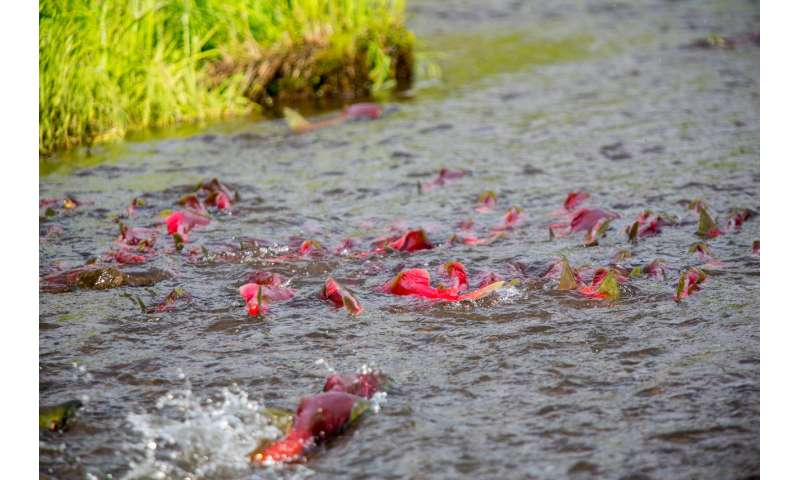 When to fish: Timing matters for fish that migrate to reproduce